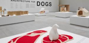 犬のための建築1枚目サムネイル