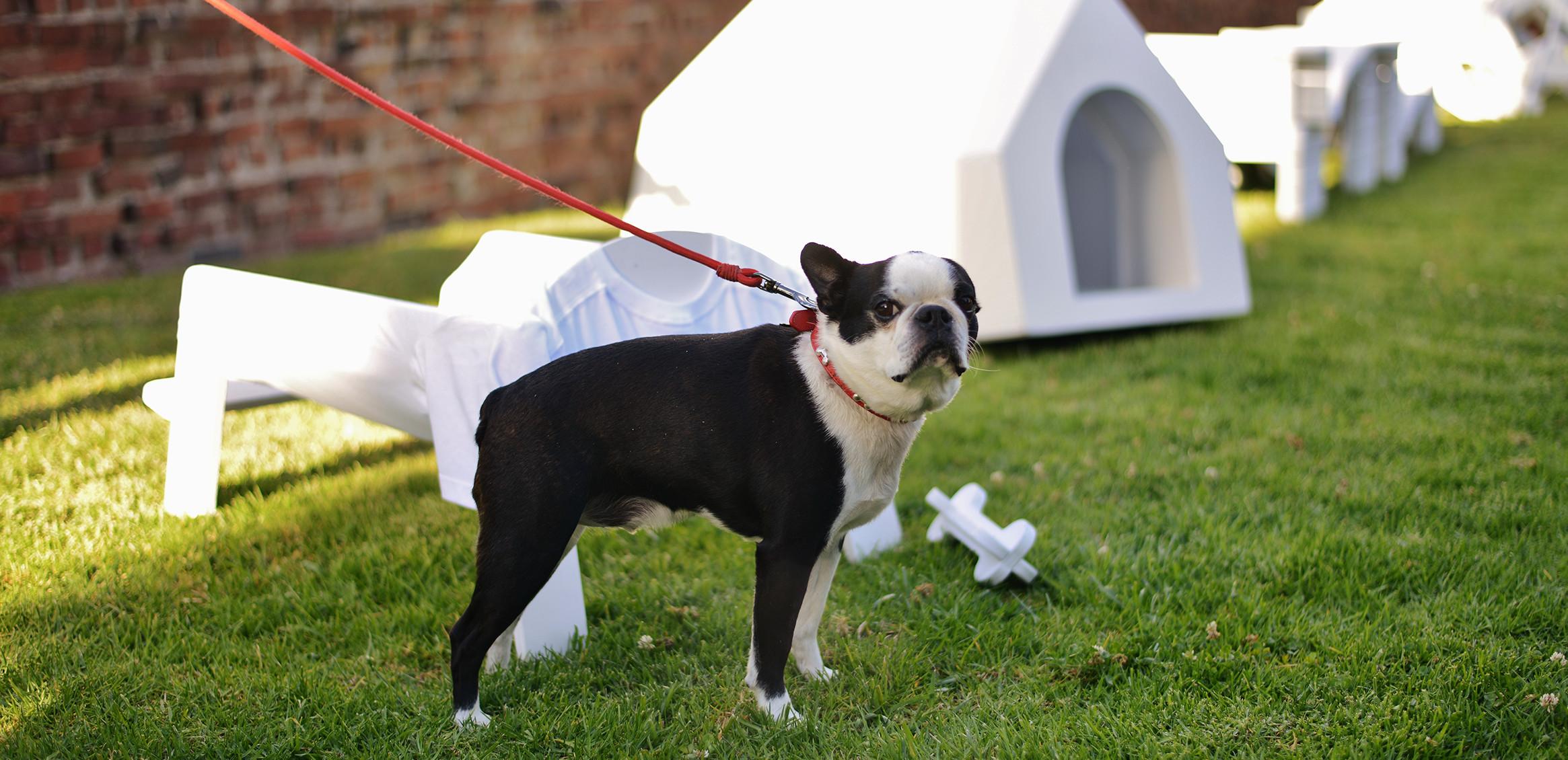 犬のための建築4枚目